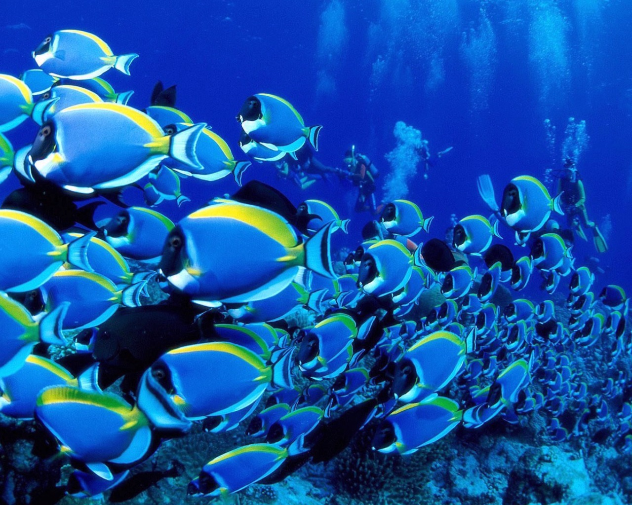 Download under sea animal wallpapers google adsense a 2 for Fish in sea