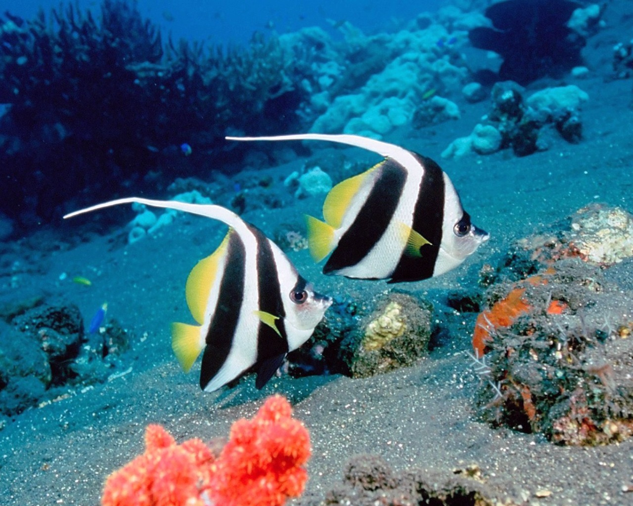 Download Under Sea Animal Wallpapers