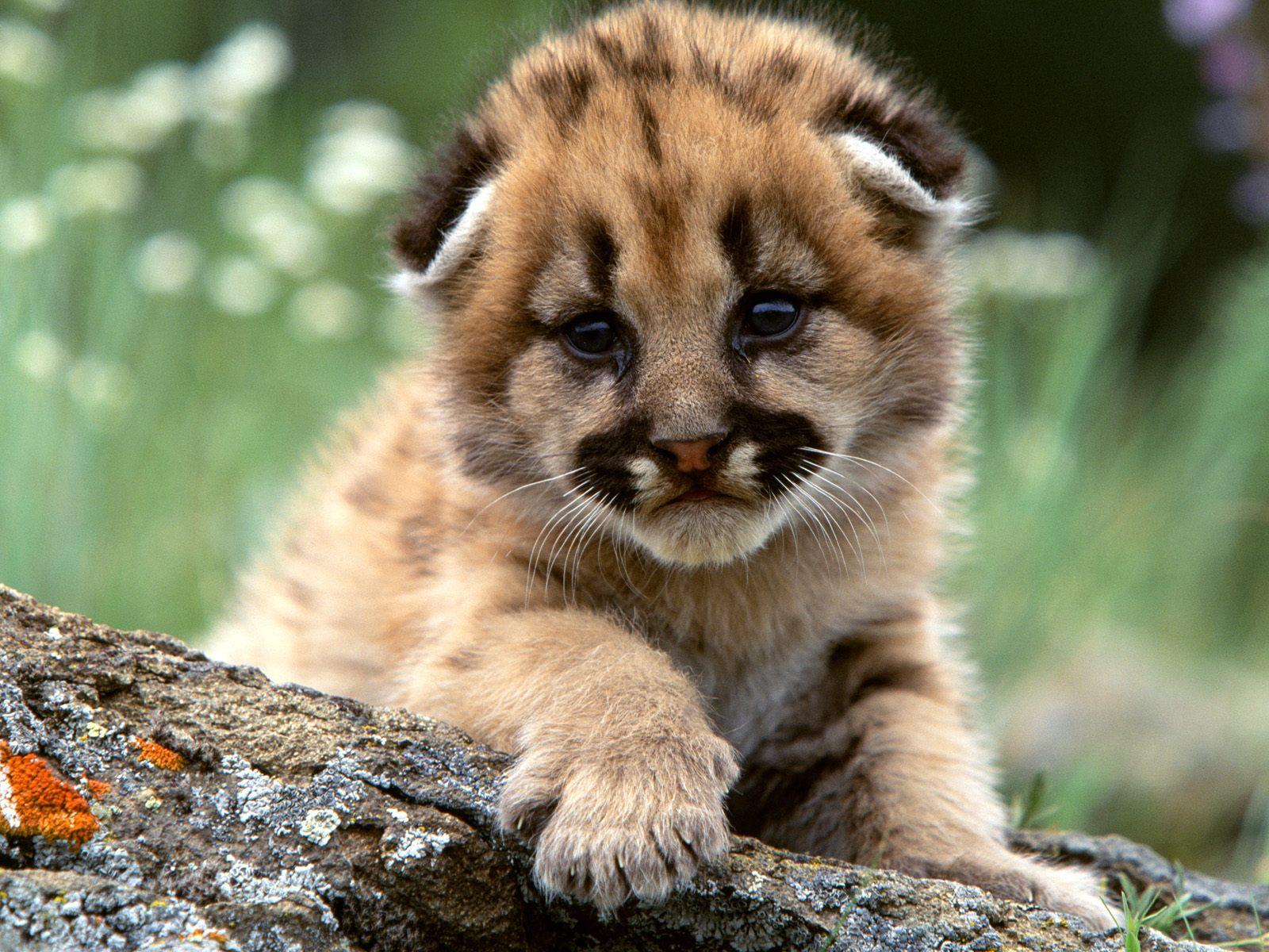 download free animal images google adsense a 2 z new tricks